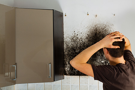 Mold-problem-and-the-mycelium-in-the-kitchen