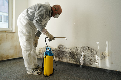 black mold removal and remediation in ann arbor