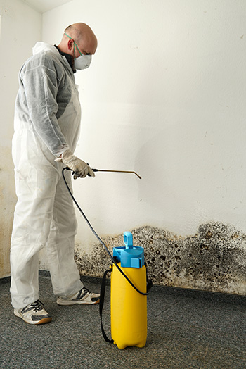 mold-removal-team-from-ann-arbor-michigan