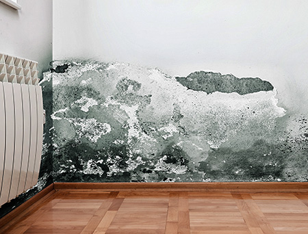 Mold-and-moisture-buildup-on-wall
