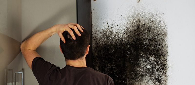BLACK MOLD REMOVAL AND MOLD REMEDIATION IN ANN ARBOR, MICHIGAN